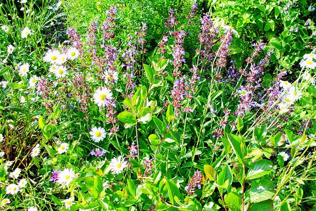 Kräuter und Blüten im Klosterkräuterschaugarten der Abtei St. Severin